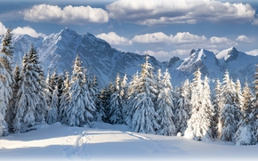 winter, snow, Mountains, forest, trees, spruce