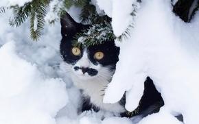 кошка, кот, зима, снег