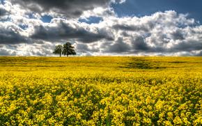 场, 花卉, 树, 景观