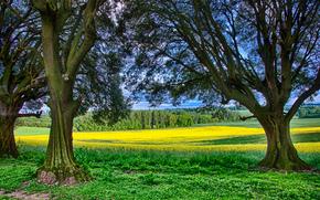 campo, alberi, paesaggio