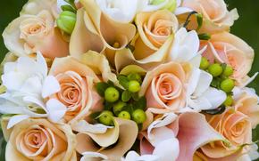 Roses, Fiori, COMPOSIZIONE, bouquet