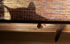 кошка, тень, хвост, уши