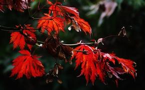 осень, ветки деревьев, листья, природа