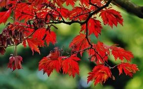 autunno, rami di alberi, fogliame, natura