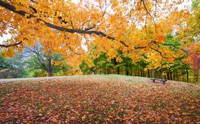 осень, парк, деревья, пейзаж