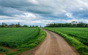 road, field, grass, landscape