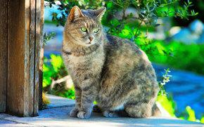 gatto, COTE, visualizzare