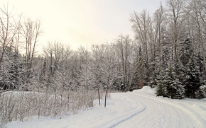 winter, road, trees, landscape