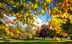 Harrogate, North Yorkshire, United Kingdom, Harrogate, North Yorkshire, UK, autumn, park, trees, landscape