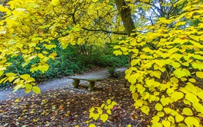 autumn, forest, park, trees, A bench, footpath, nature