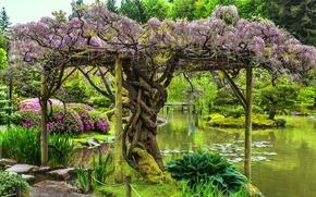 парк, озеро, деревья, пейзаж
