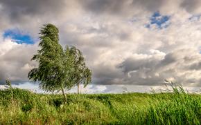 pole, drzew, krajobraz