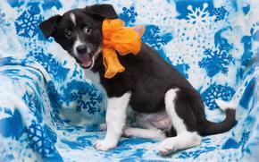 собаки, собака, щенок, щенки, фон, ткань, бантик