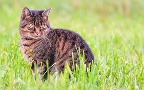 COTE, gatto, visualizzare