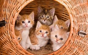 Kittens, basket, view