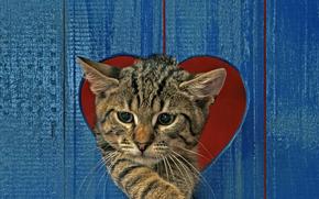 cat, COTE, kitten, view