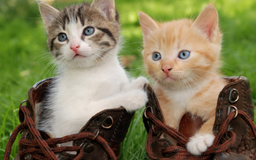Kittens, boots, view