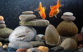 acquario, pesce, pietre