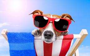 dog, glasses, view, animal
