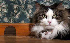 кот, кошка, крыса, друзья