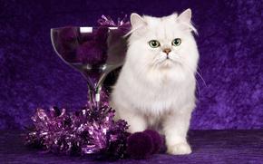 gatito, blanco, oropel