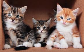Gattini, bambini, trio