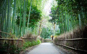 Арасияма, Бамбуковый лес, Киото, Япония
