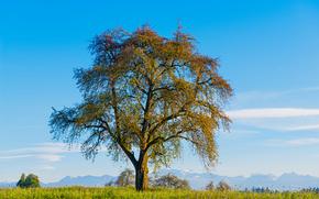 поле, деревья, пейзаж
