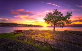 coucher du soleil, lac, côte, arbre, paysage