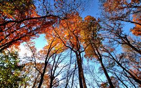 лес, деревья, верхушки, кроны, осень, природа