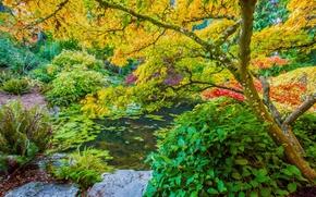 ogród, jesień, drzew, staw, park, krajobraz