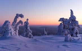 закат, зима, снег, деревья, сугробы, пейзаж