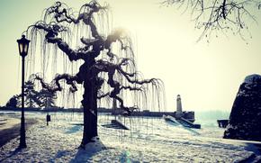 puesta del sol, invierno, faro, árbol, linterna