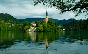 Le lac de Bled, Slovénie, Le lac de Bled, Slovénie, Église Mariinsky, Montagnes, île, lac, église