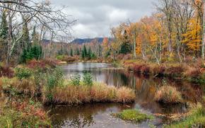 autunno, lago, alberi, paesaggio