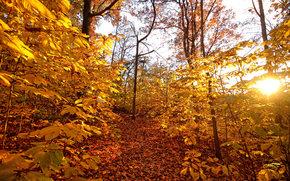 bosque, otoño, árboles, naturaleza