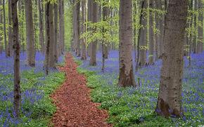 лес, деревья, цветы, тропинка, природа