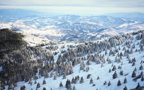 inverno, Colline, alberi, paesaggio