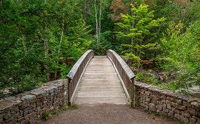 мост, деревья, лес, природа