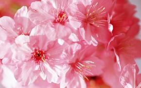 цветы, цветок, флора, цветение, весна
