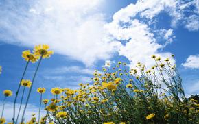 Fiori, fiore, flora, giallo, cielo, nuvole