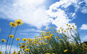 Flores, flor, flora, amarillo, cielo, nubes