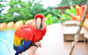 bird, birds, parrot, background