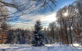 Winter, Schnee, Bäume, Drifts, Landschaft