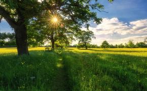 domaine, Tropical, arbres, paysage