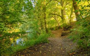 речка, лес, деревья, тропинка, пейзаж