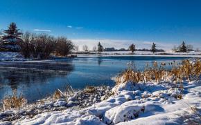 winter, river, trees, landscape
