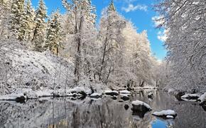 invierno, río, árboles, paisaje
