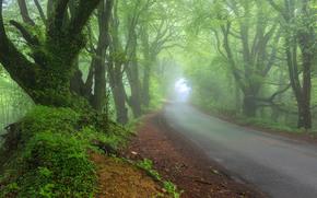 stradale, alberi, nebbia, paesaggio