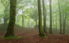 лес, парк, деревья, туман, природа